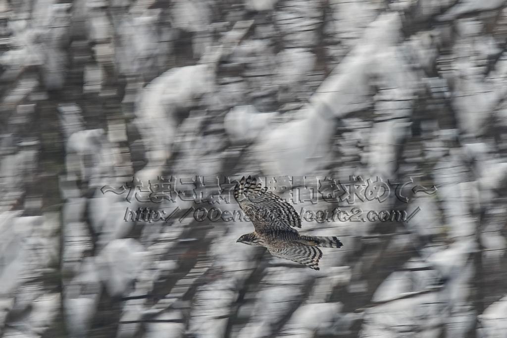 7D2_6850.jpg