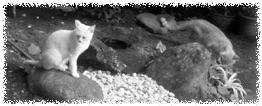 お庭の地域猫イメージ