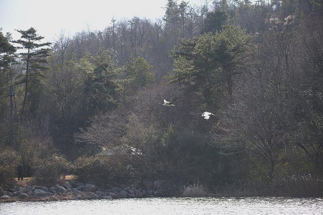 自然保護センターの丹頂13