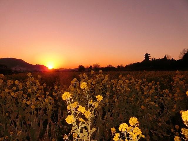 国分寺の夕陽3