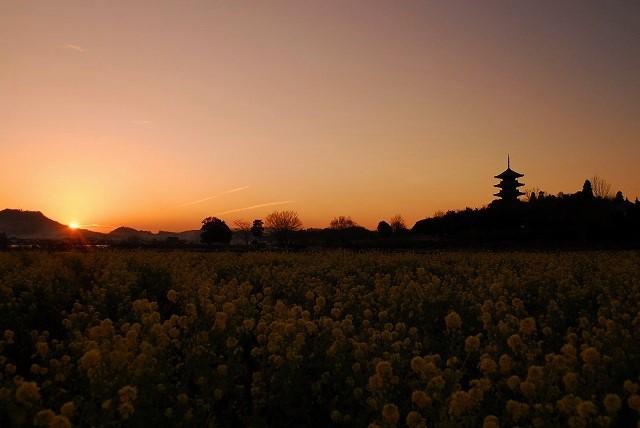 国分寺の夕陽7
