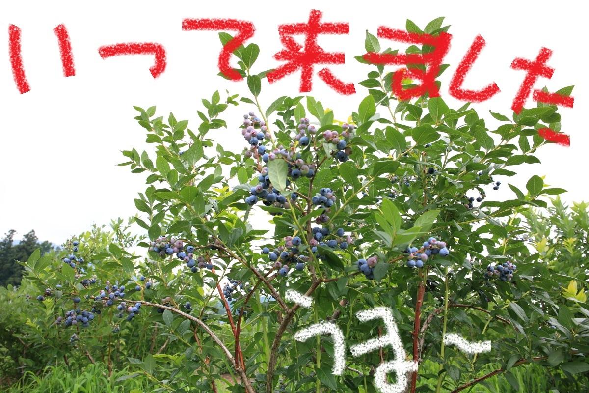 5_20150731200118621.jpg