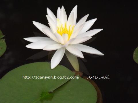 2015_8_10_hana2.png