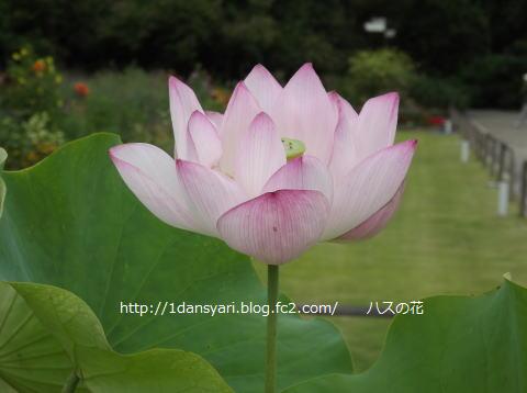 2015_8_11_hana2.png