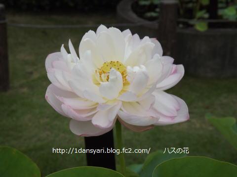 2015_8_12_hana2.png