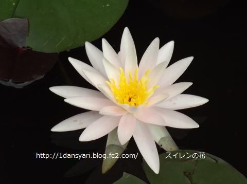 2015_8_13_hana2.png