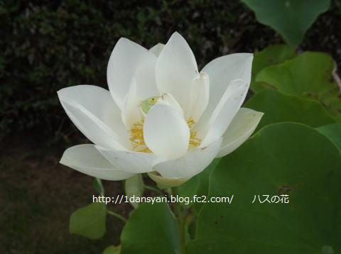 2015_8_16_hana1.png
