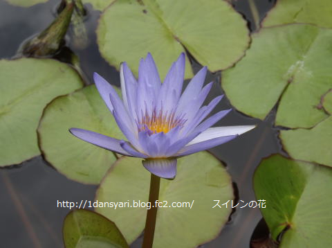 2015_8_17_hana1.png
