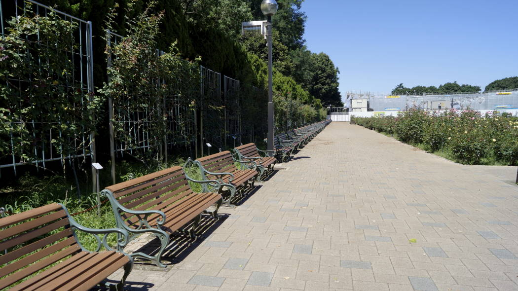 AAA神代植物園バラ園ー0ー2015072