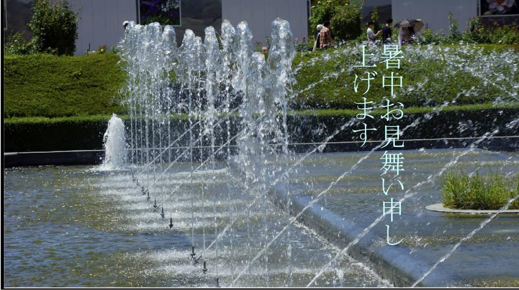AAAADD神代植物園バラ園 噴水広場 ー8ー20150722