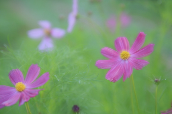 ワタシの夏休み at 軽井沢 2015