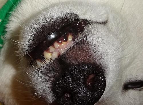 DSC02466カノンきれいな歯