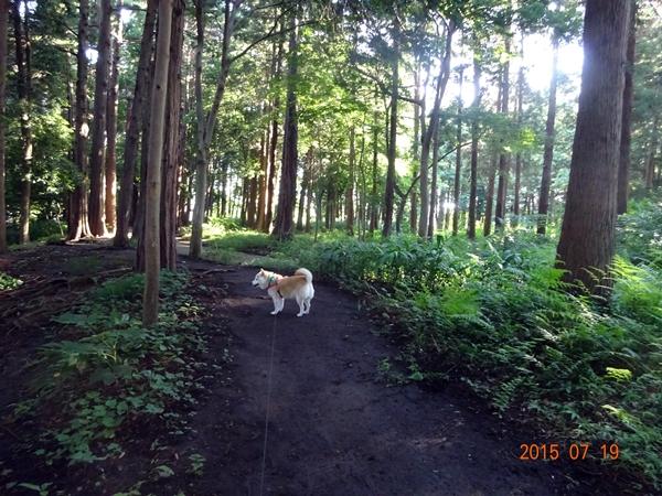 DSC02480森のカノン