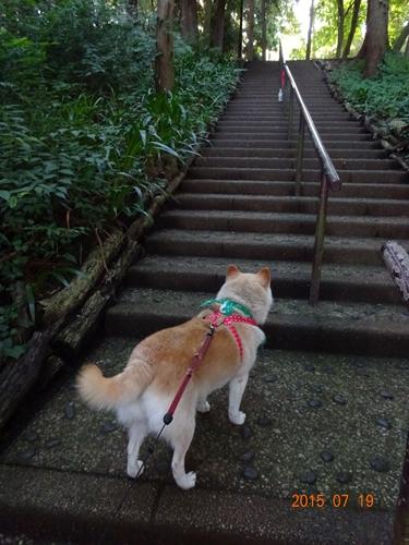 DSC02475階段を見てビビるカノン