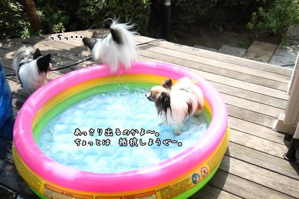 IMG_0320新プール新プール