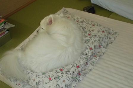 チョコ枕1