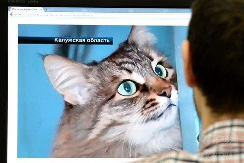 20150117野良猫マーシャ