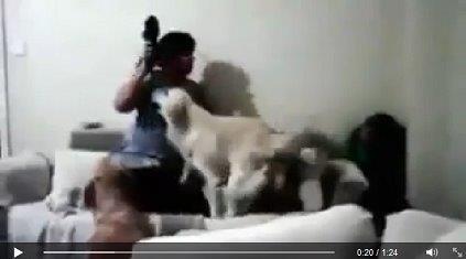 20150127子供を守る犬2匹