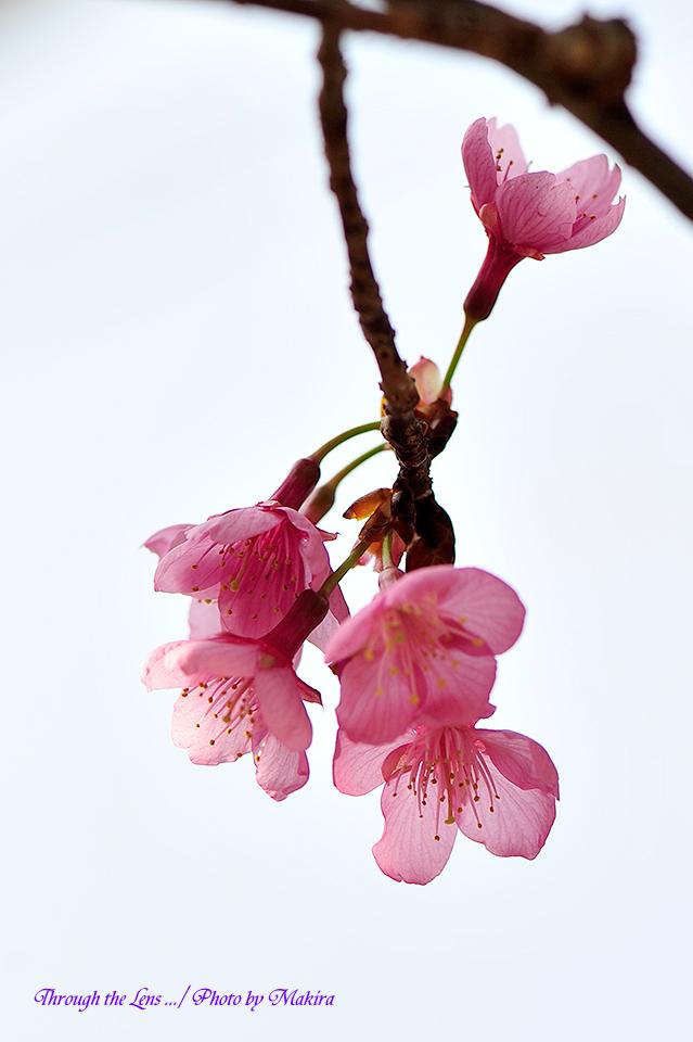 久保山緋桜4