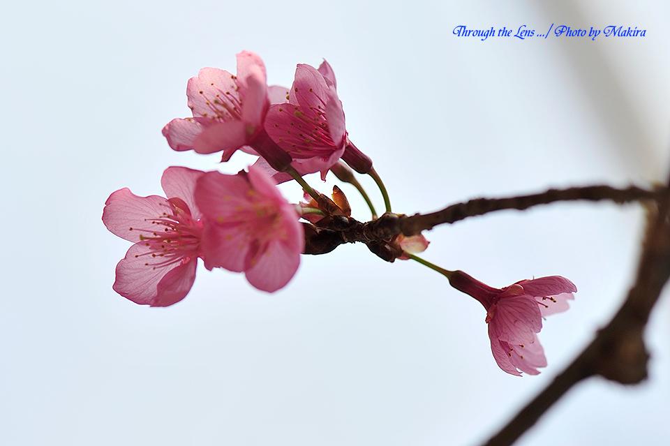 久保山緋桜5