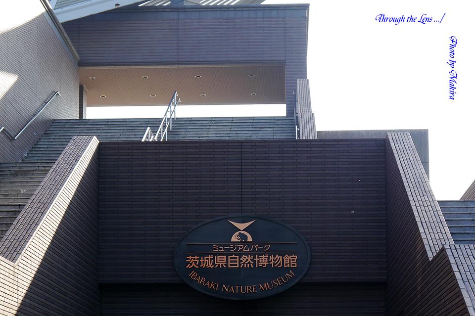 茨城県自然博物館L1