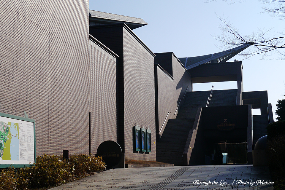 茨城県自然博物館L2