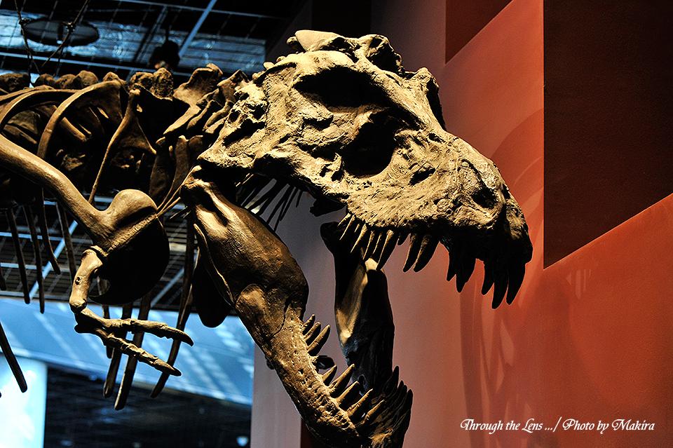 恐竜化石(ティランノサウルス)1