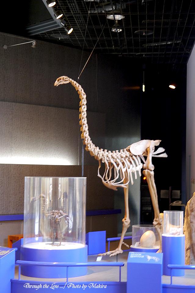 恐竜化石L2
