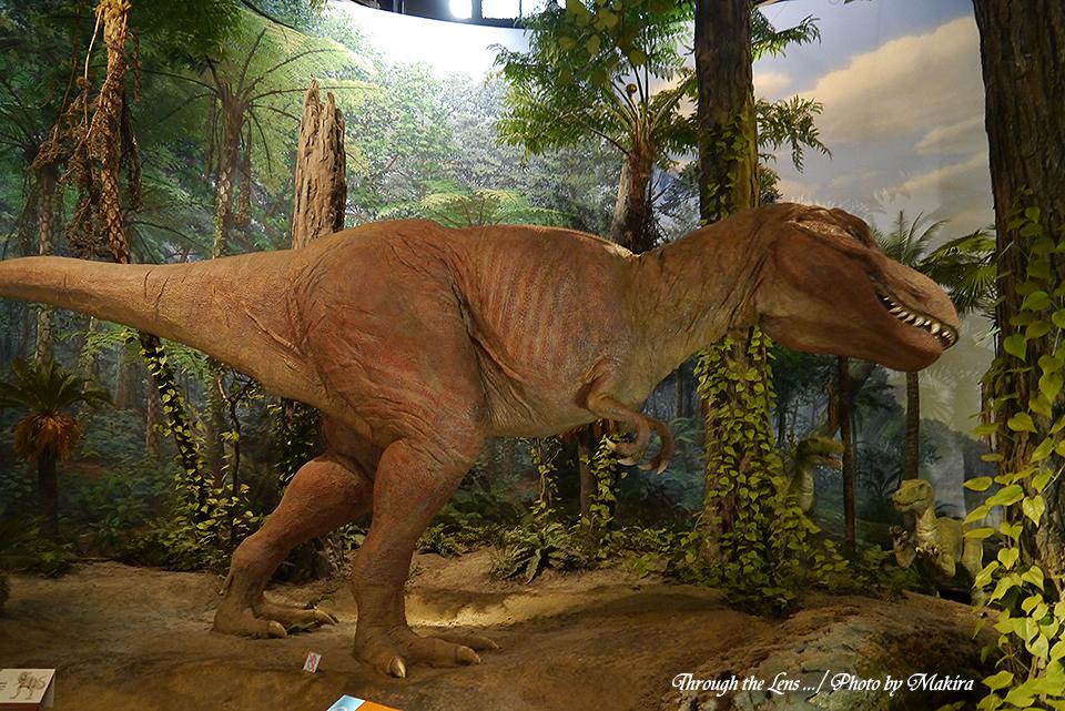 恐竜復元(ティランノサウルス)L1