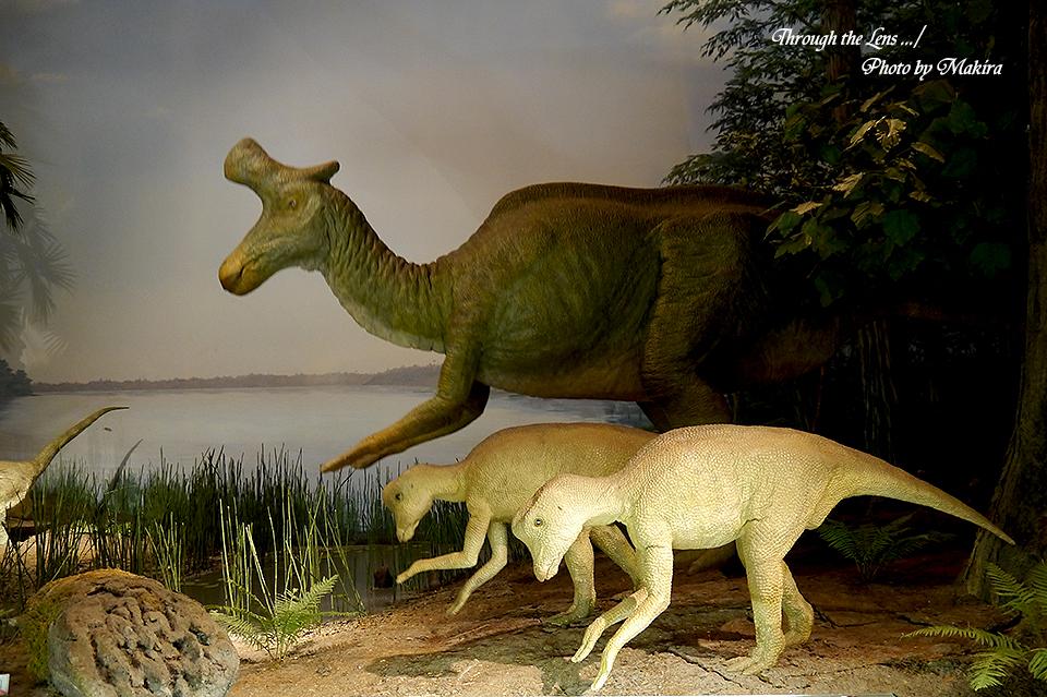 恐竜復元(ハドロサウルス)L2
