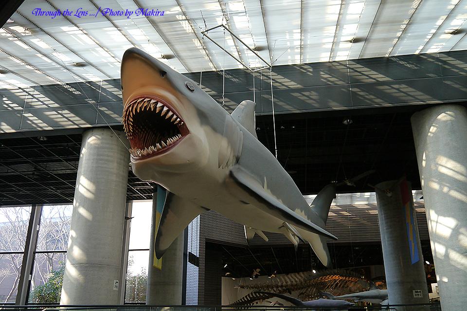 巨大サメL1
