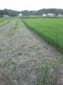 H27.7.14田んぼの畦の草刈り@IMG_5704