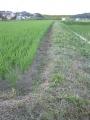 H27.7.14田んぼの畦の草刈り@IMG_5705