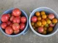 H27.7.20本日の収穫物@IMG_5731