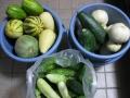 H27.8.11本日の収穫物@IMG_5926