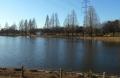 ボート池①