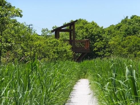 キウシト湿原8
