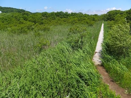 キウシト湿原10