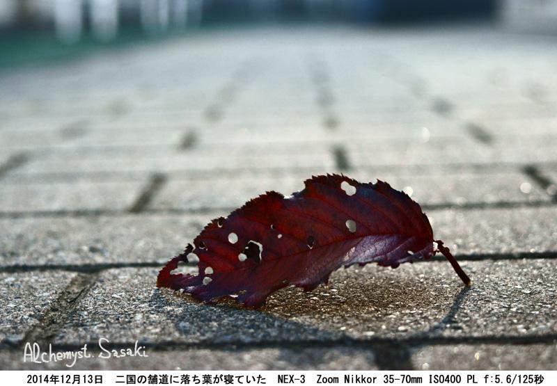 落ち葉DSC06552