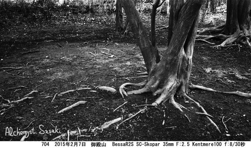 樹704-7 Ⅱ