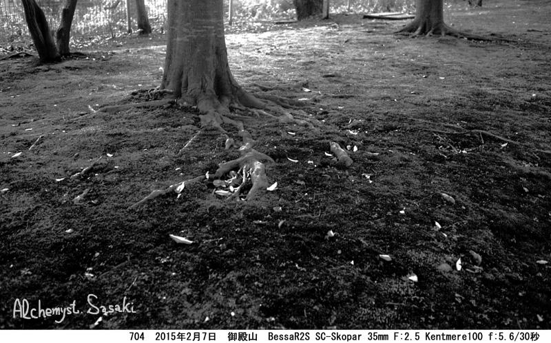 樹704-8 Ⅱ