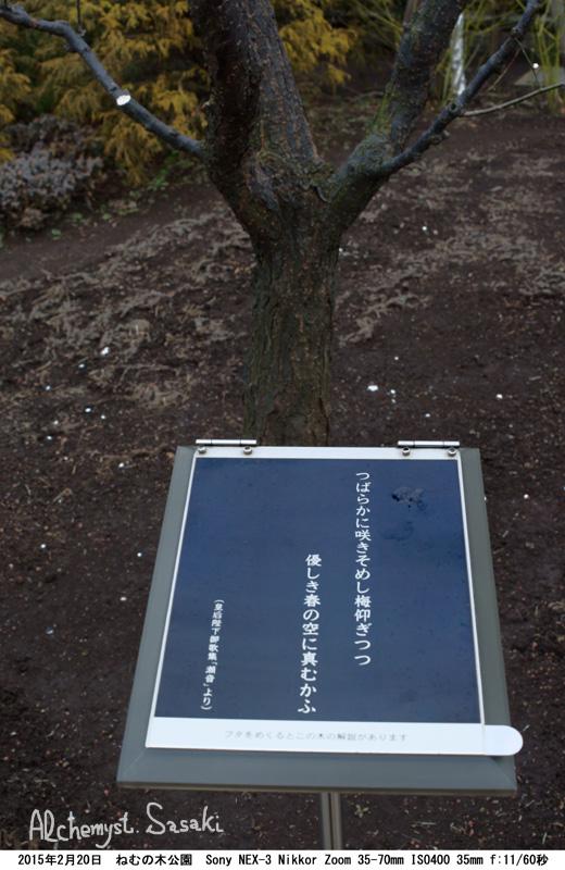 ねむの木DSC07677