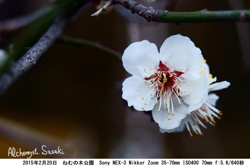 ねむの木DSC07690