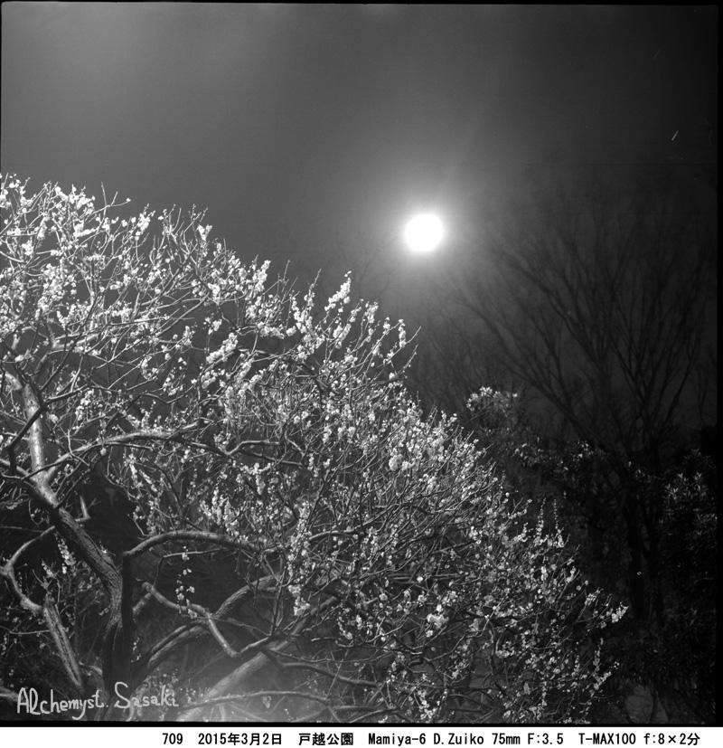 月と白梅709-10w