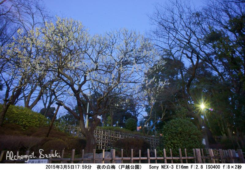 夜の梅-2DSC08123