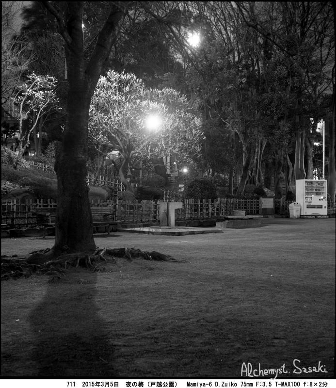 夜の白梅711-9