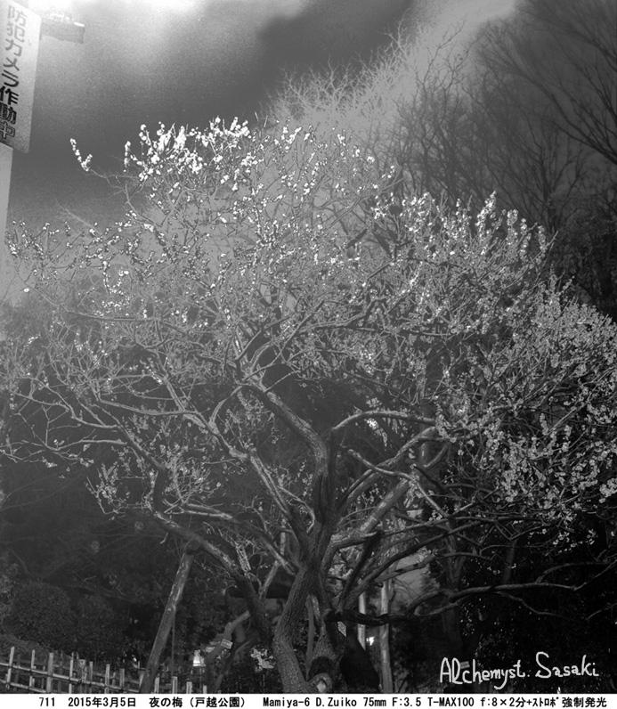 夜の白梅711-11 Ⅱ