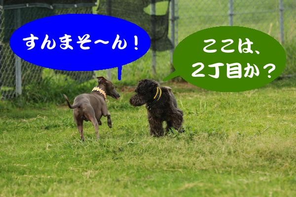 IMG_2293_convert_20150820193248.jpg