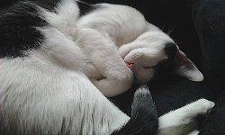 sleepwellcat1.jpg