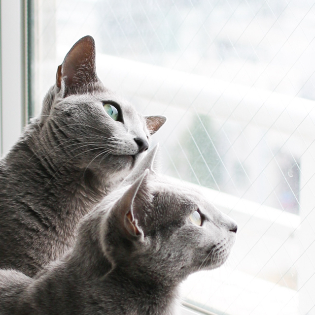 窓辺のふたり